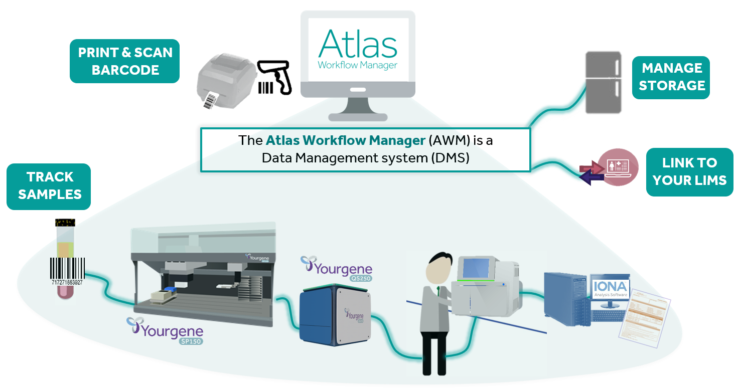 Atlas workflow